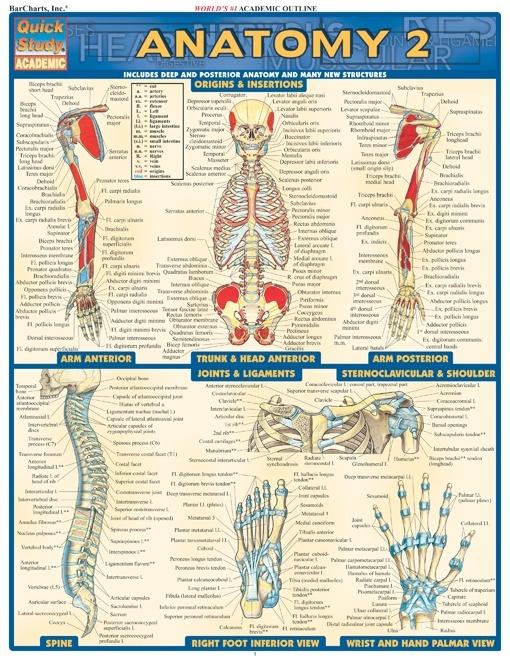 The study of anatomy