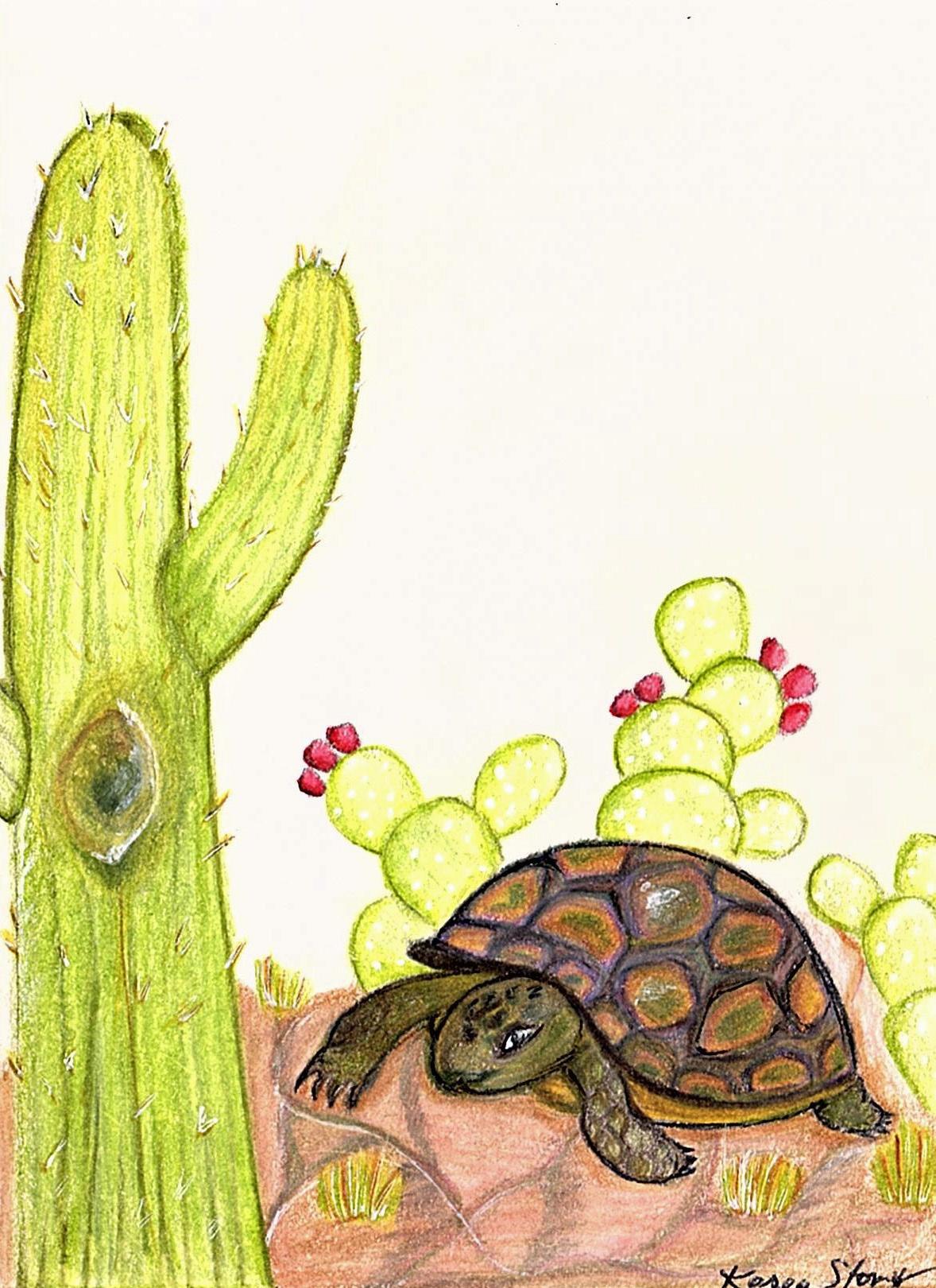 Tortoise and Cactus