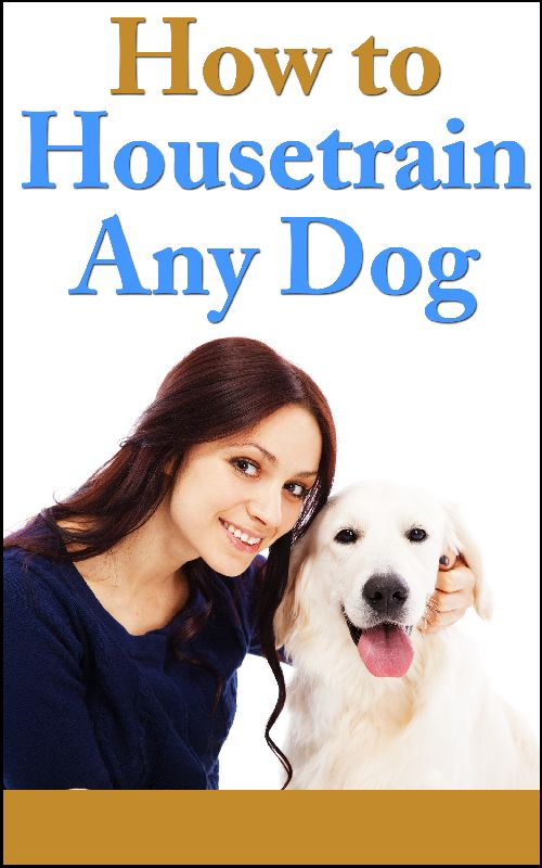 How To Housetrain A Dog