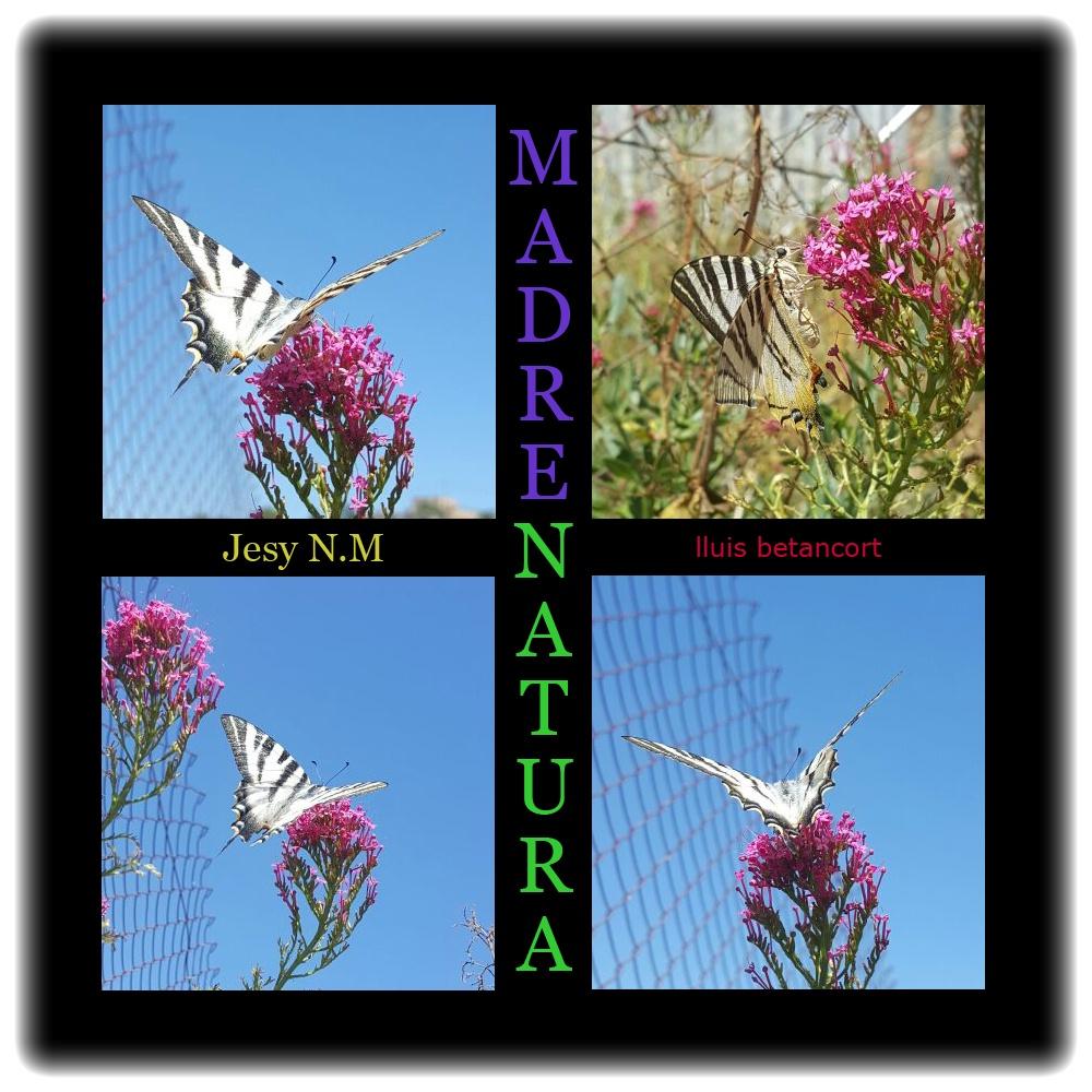 Foto Colage Mariposa de Jesy N.M por lluis betancort marenatura