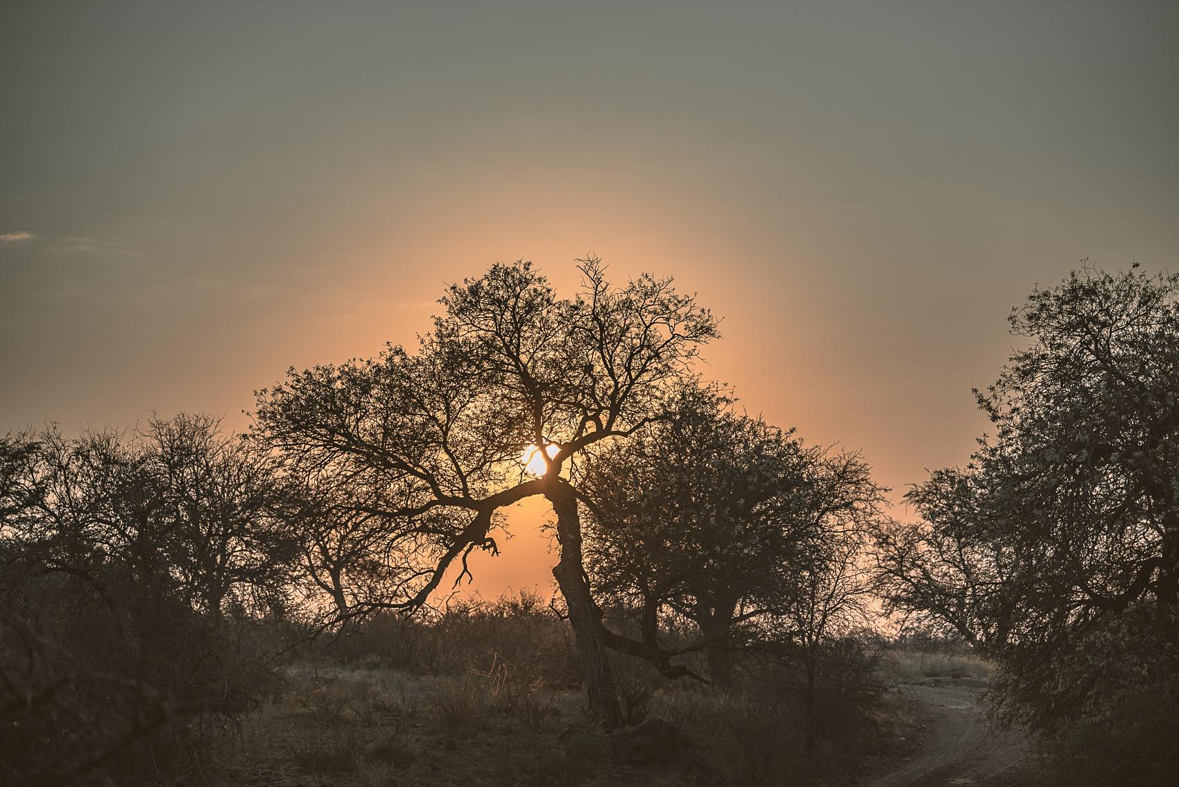 Safari 4 - sunrise