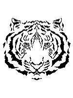 White Tiger's Head