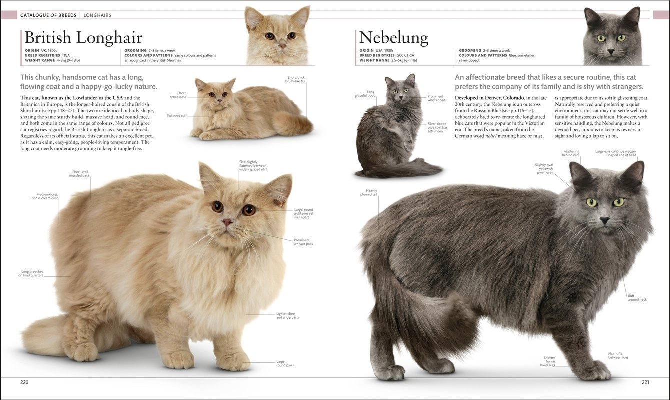 The Cat Encyclopedia - The Definitive Visual Guide