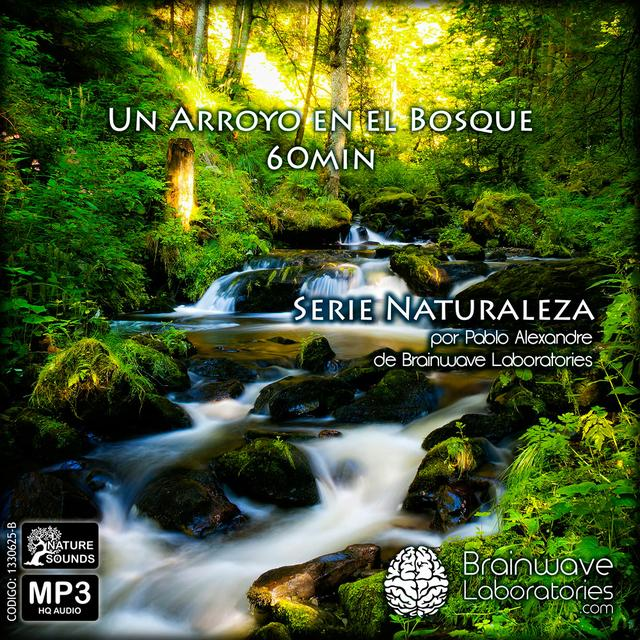MP3 HQ - Un Arroyo en el Bosque 60min