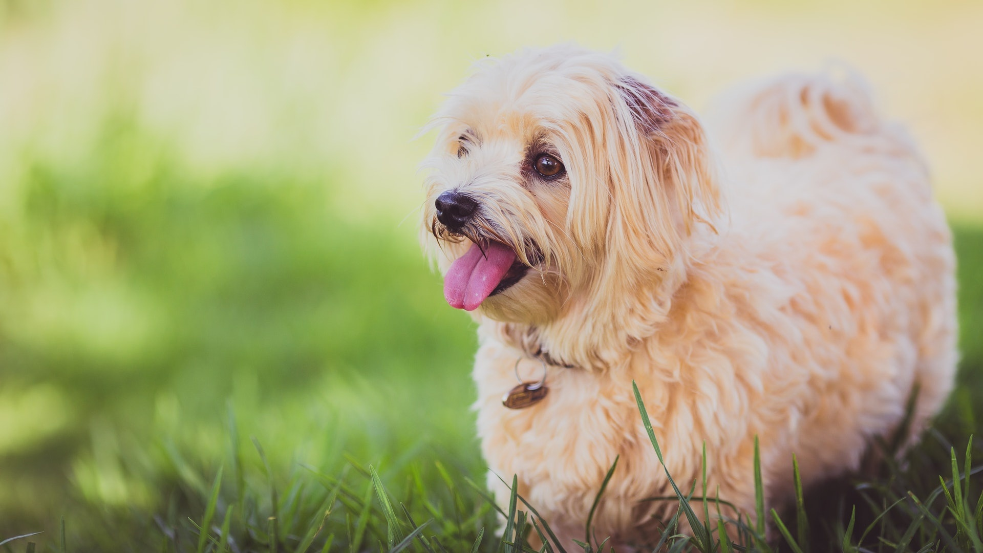 Dog Stock Photos Collection [Free Download]