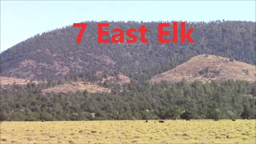Unit 7 East Late Bull Elk