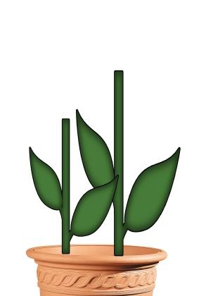 PDF PLANT POT / STEMS