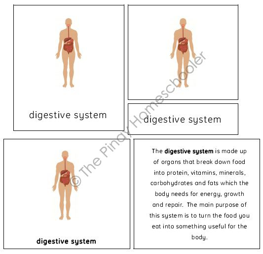 The Basic Human Body Systems