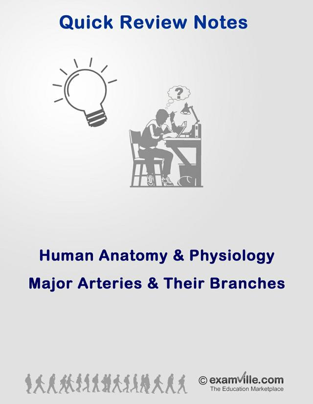 Human Anatomy Review - Major Arteries and Their Branches