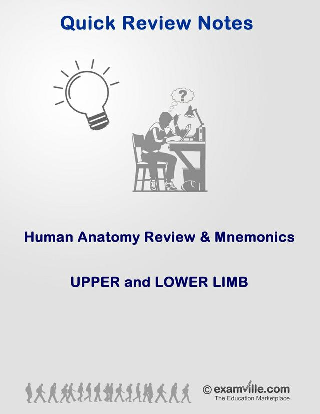 Anatomy Review and Mnemonics - Upper and Lower Limbs