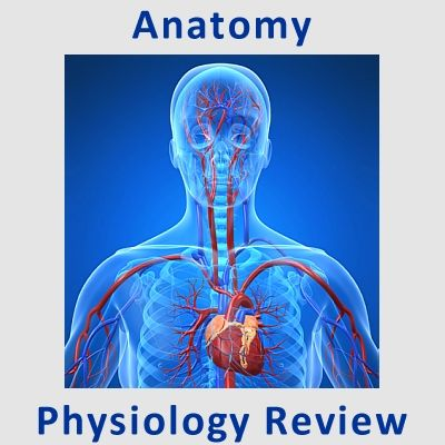 Examville.com - Physiology - Electrocardiogram