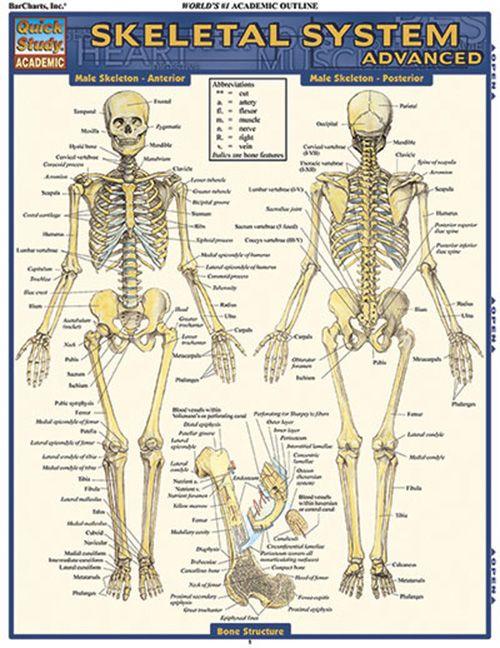 Topic 5 Skeletal System Manual Guide