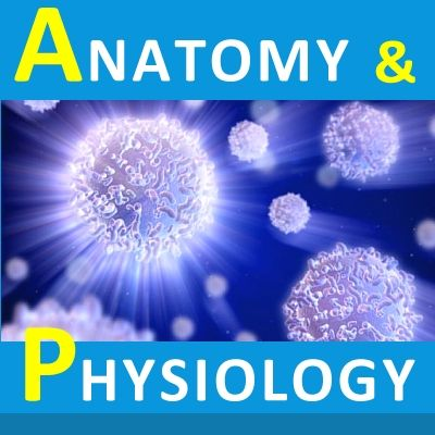 Human Anatomy and Physiology Quick Review