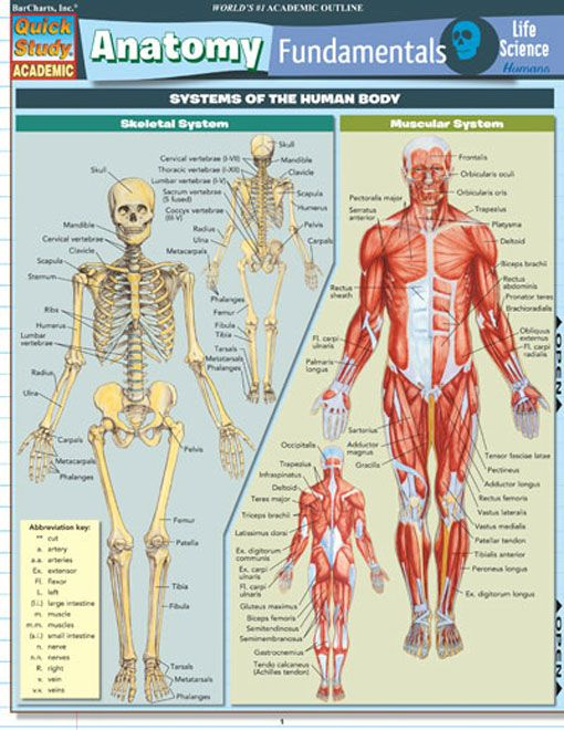 Fundamentals of anatomy and physiology (2014, 10th edition),bonus ...