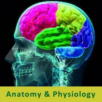 Cranial Nerves and their Major Functionality