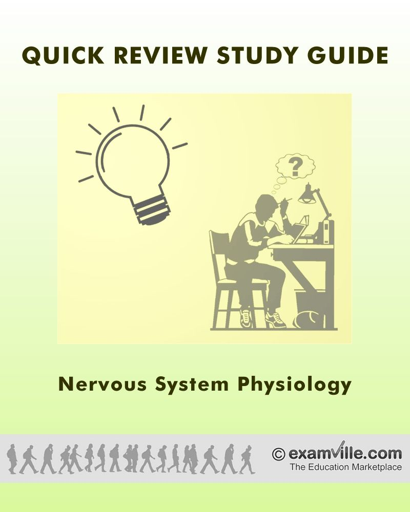 Quick Review Notes: Nervous System Physiology