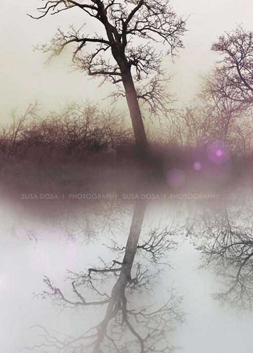 - Trees in Purple Light