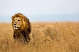 THE LION METHOD (HF PRIVATE DISCOUN)