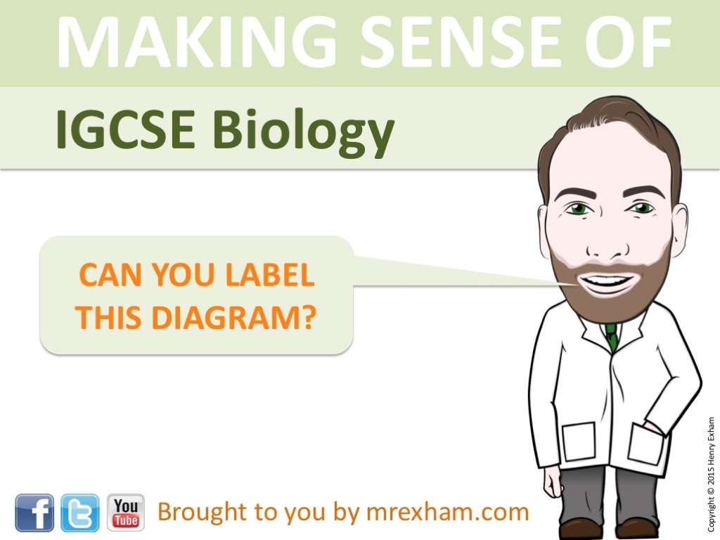 edexcel igcse human biology answers New grade 9-1 edexcel international gcse biology: revision guide with online   gcse biology: exam practice workbook (includes answers) (beqi42.