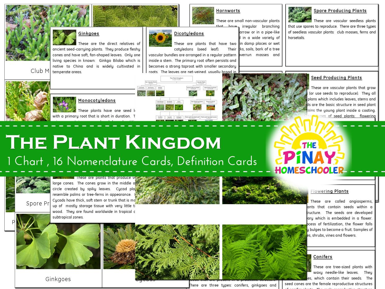 the plant kingdom pinay homeschooler pdf shop sellfycom