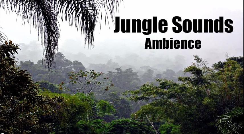 ambience hub jungle sounds ambience hub. Black Bedroom Furniture Sets. Home Design Ideas
