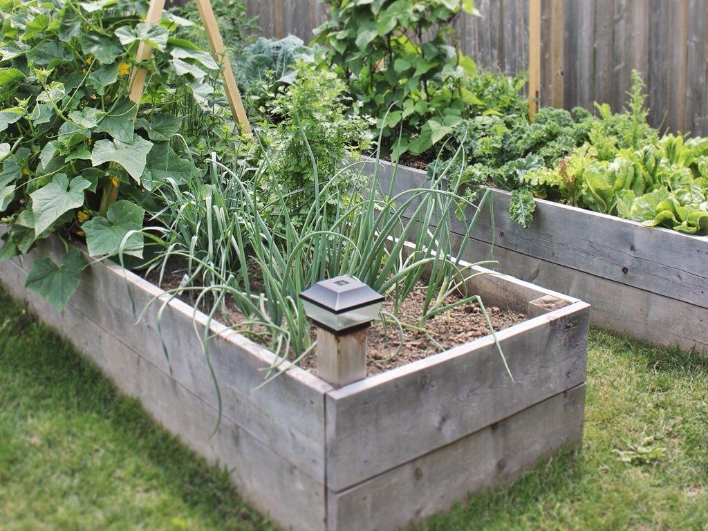 U-Shaped Raised Garden Bed Drawing & Rendering
