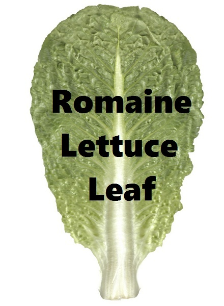 Romaine Lettuce Leaf Download