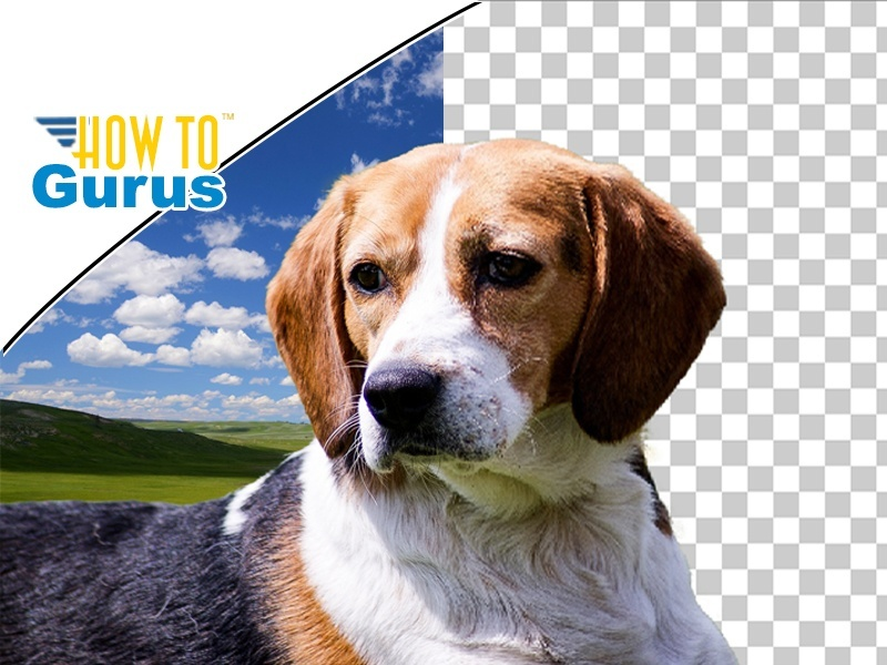 Photoshop Elements How to Remove Background Tutorial : Change Background in 15 14 13