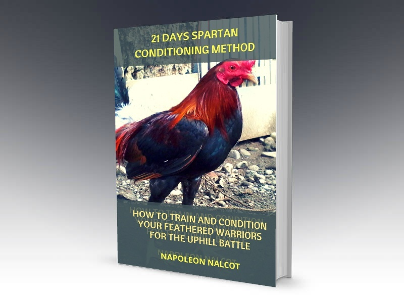21 Days Spartan Conditioning Method: How to Condition Your Feathered Warriors For the Uphill Battle