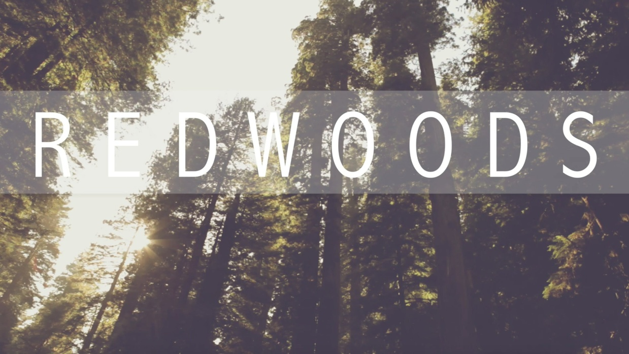 """Redwoods"" Lyric Video"