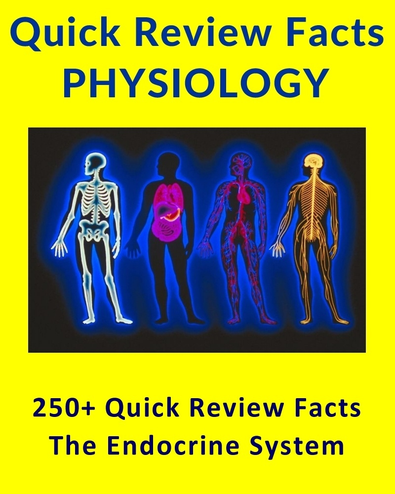 250+ Quick Review Facts for Science Students - The Human Endocrine System