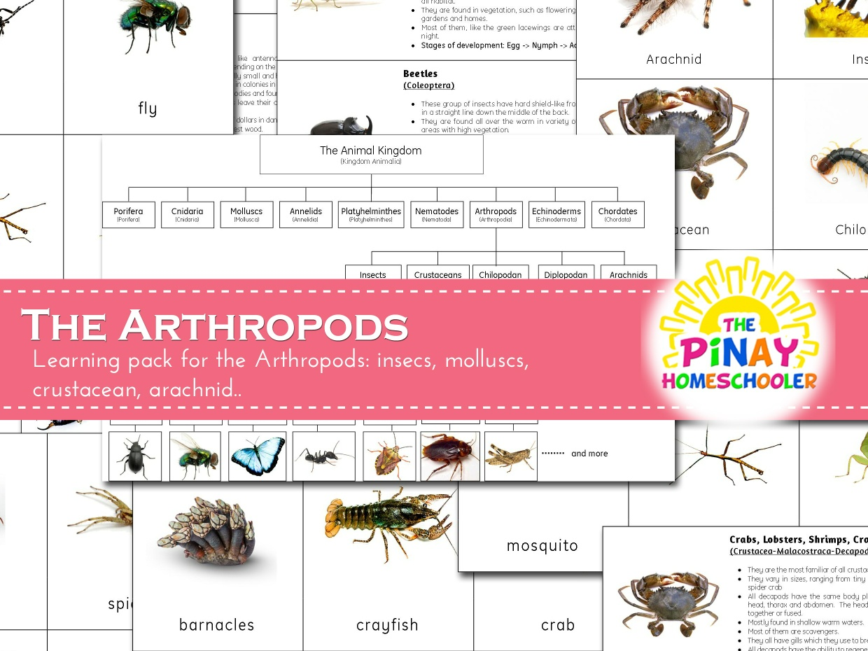 The Arthropods Learning Pack