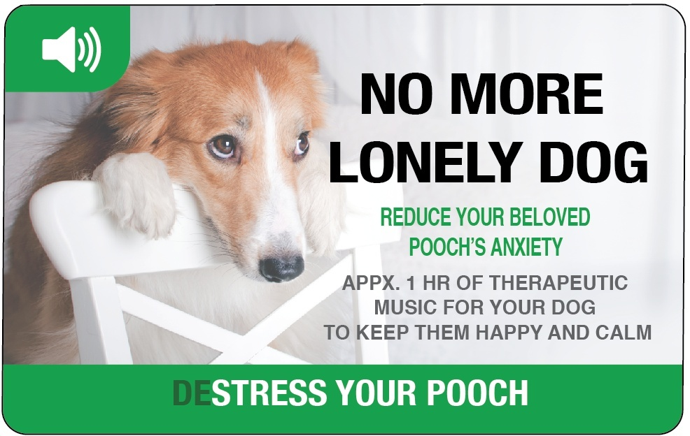 No More Lonely Dog