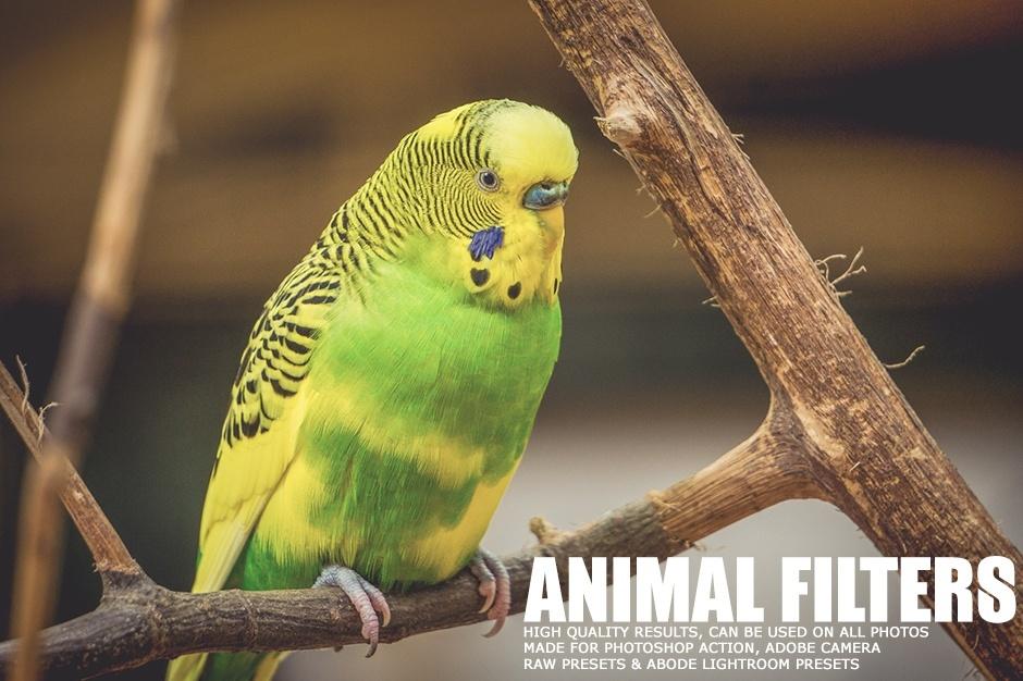 17 Animal Lightroom Presets