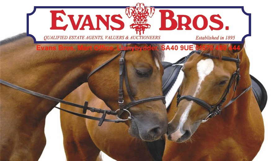 Evans Bros Horse Sale Catalogue For October 2015
