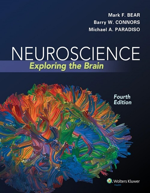 Neuroscience exploring the brain 4th edition pdf fandeluxe Gallery