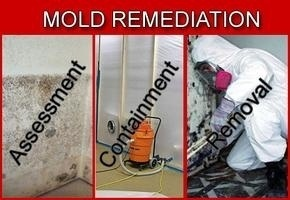 Mold Remediation Contractor Certification Course Online