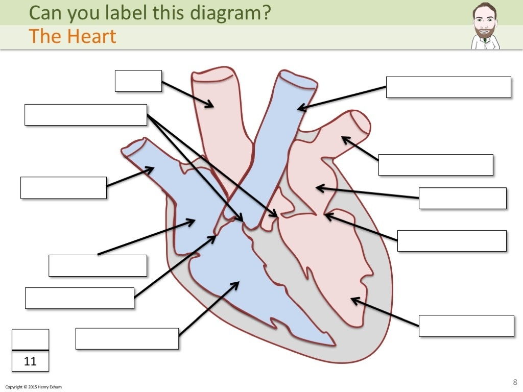 biology as revision Learn biology revision with free interactive flashcards choose from 500 different sets of biology revision flashcards on quizlet.