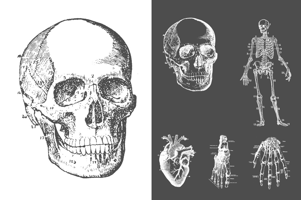 Anatomy Vector Collection
