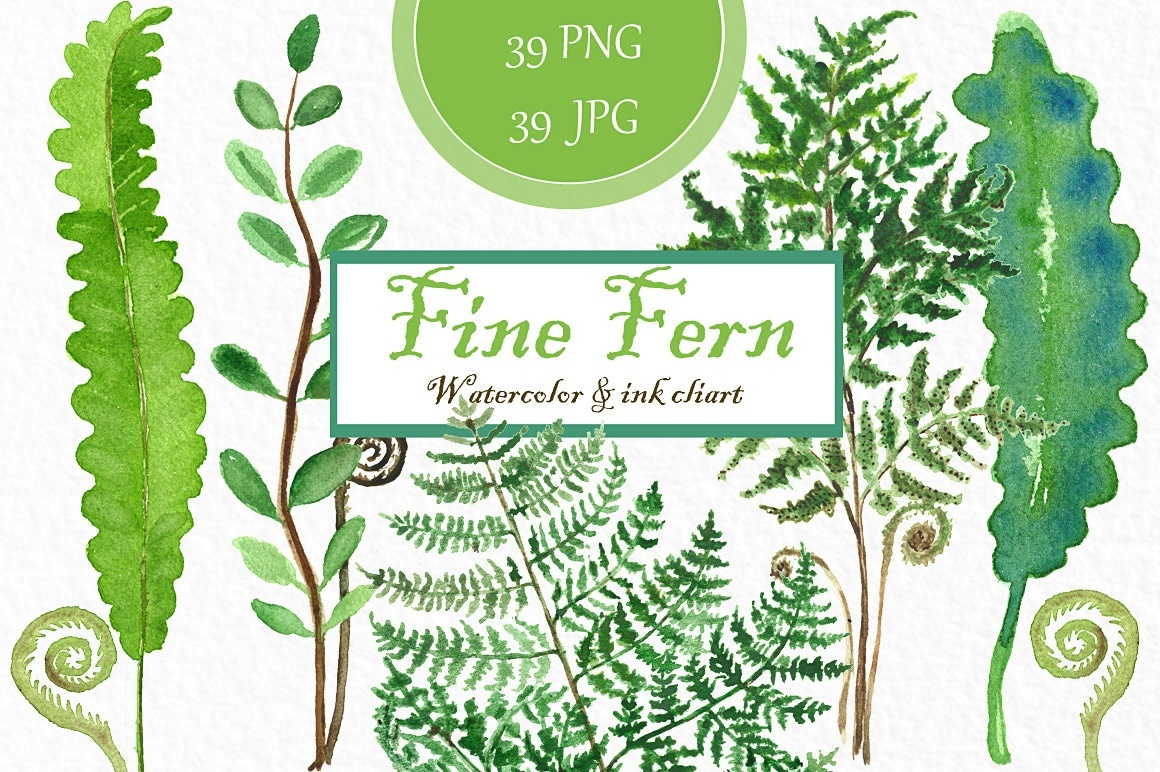 Fine fern. watercolor clipart