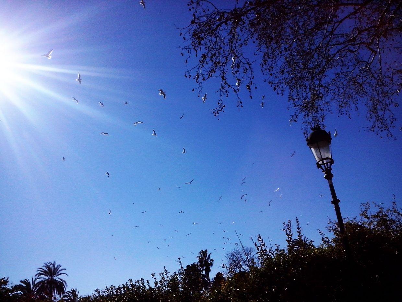 Cielo soleado aves volando parque de la ciudadela