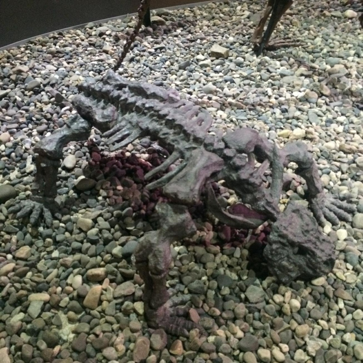 Fossils of an ancient animal!