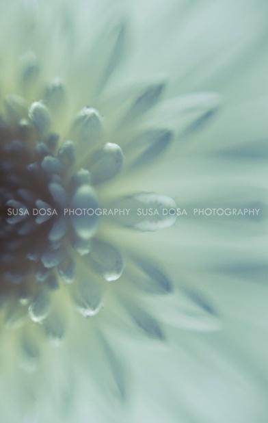 - Delicate flower -