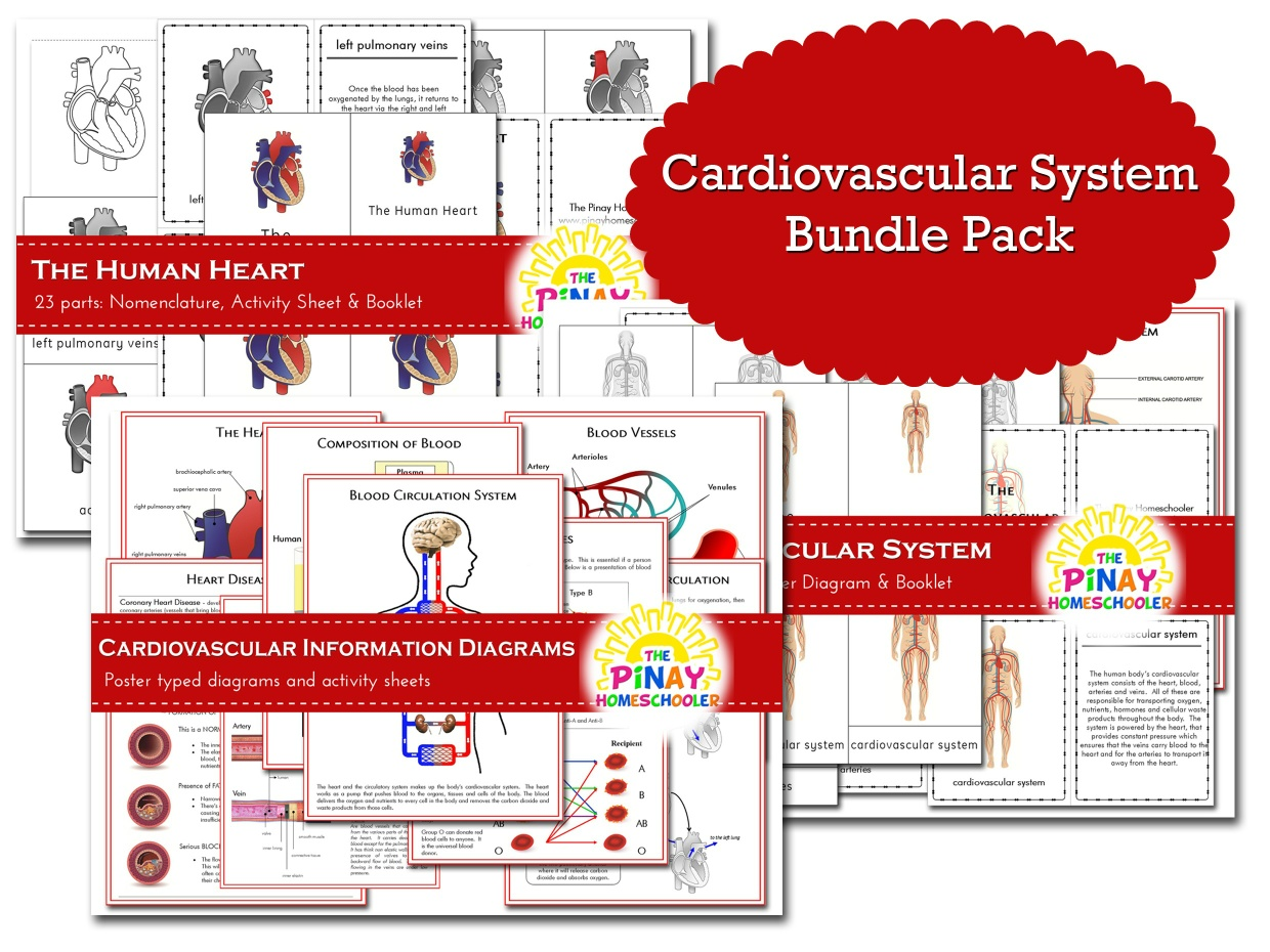 Cardiovascular System BUNDLE PACK