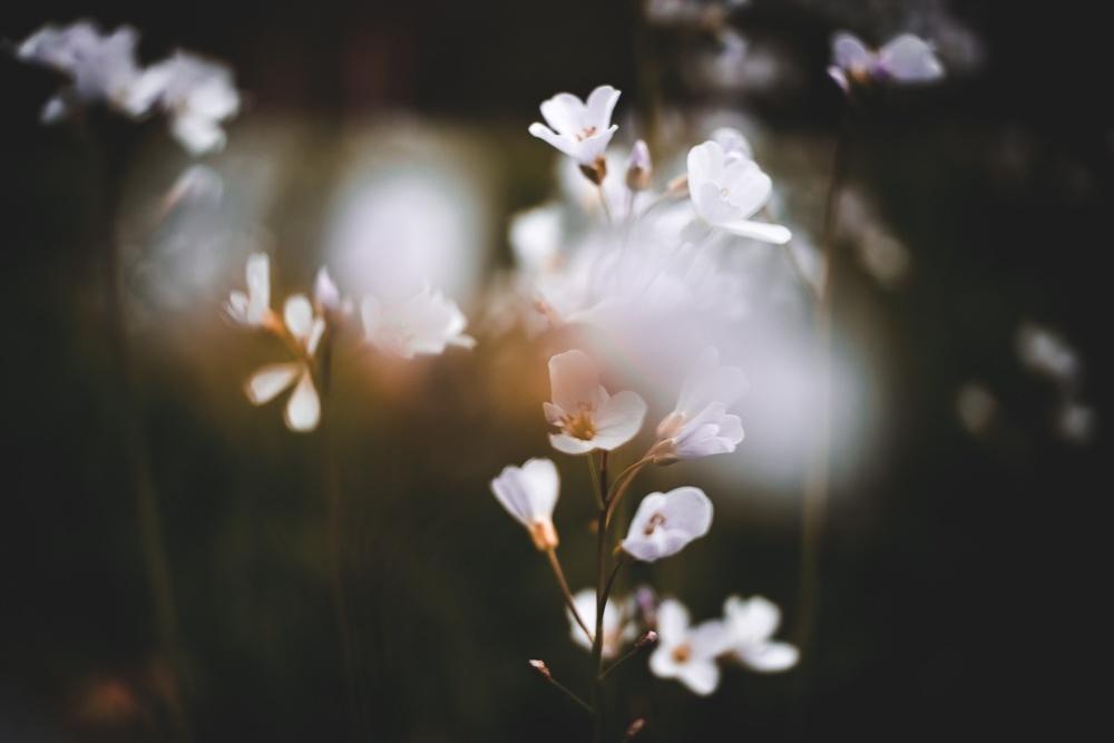 Spring Presets