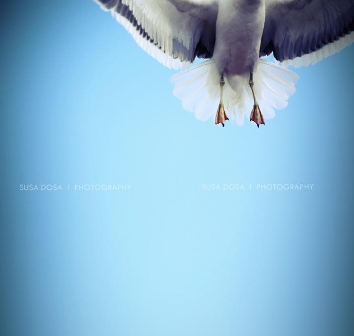 - Fly -