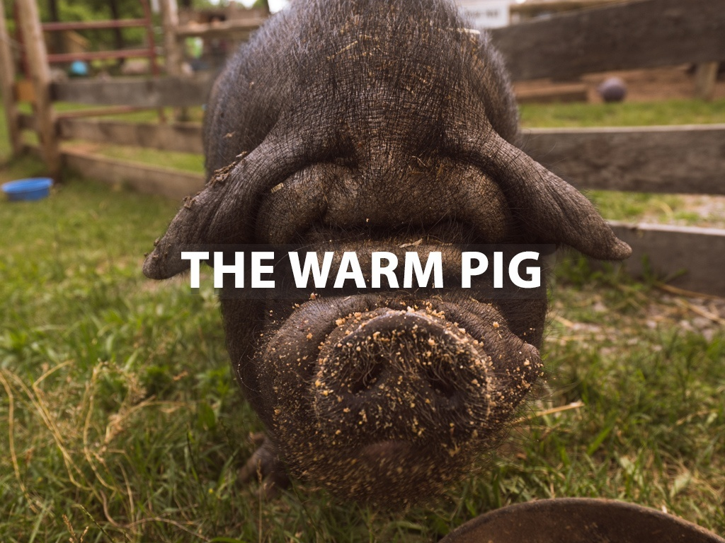 """The Warm Pig"" - Lightroom Preset"
