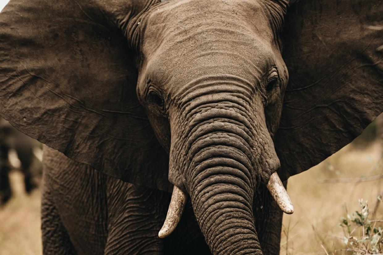 Safari 17 - Elephant