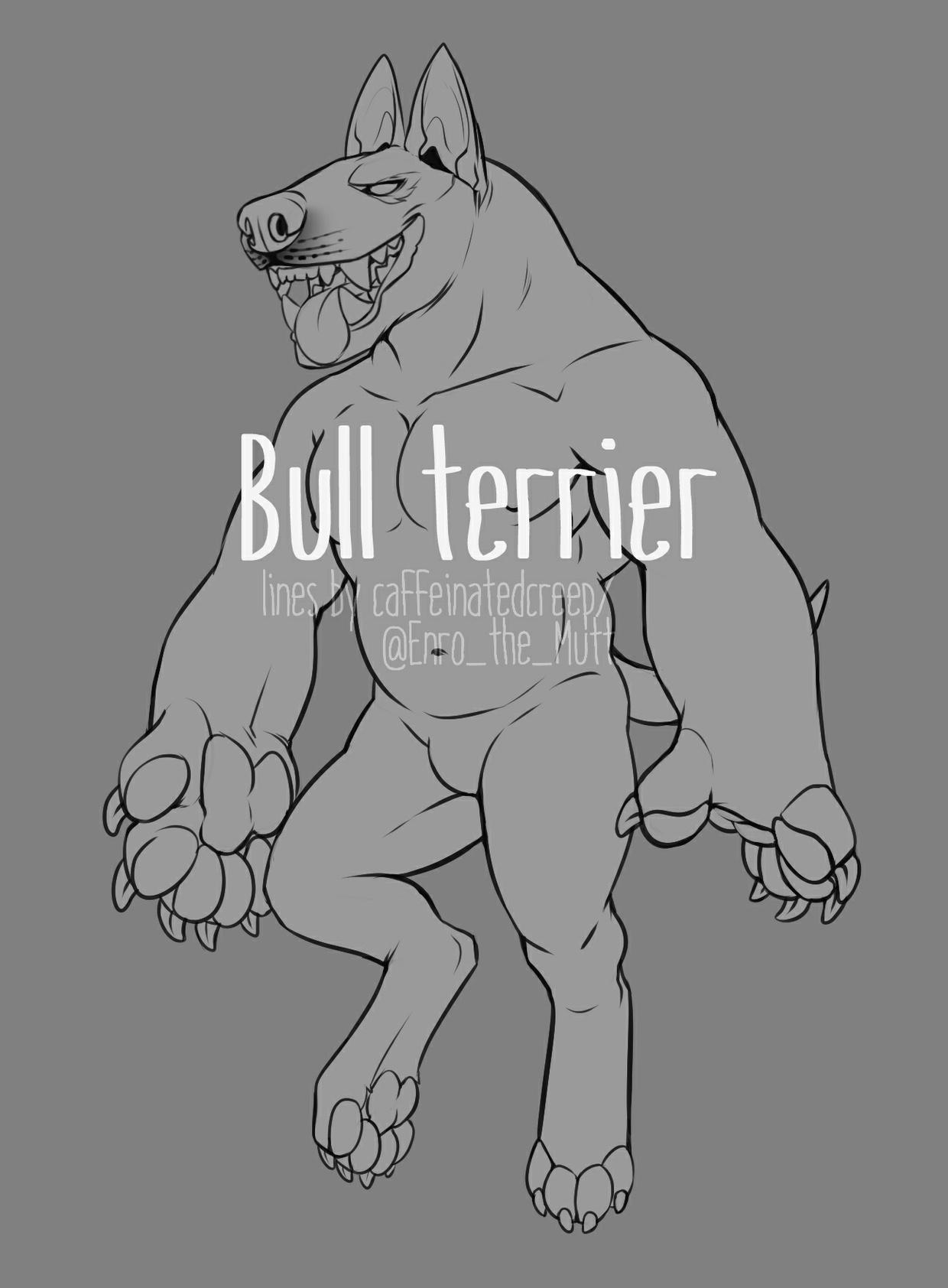 Bull Terrier base