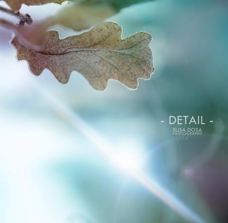 - Leaves -